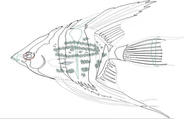 Fish Cad DWG File