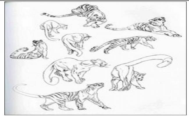 Animal Detail