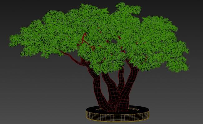 3D Ficus Benjamina Tree MAX File