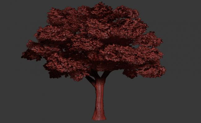 3D Model Of Platanus Summer Tree MAX File