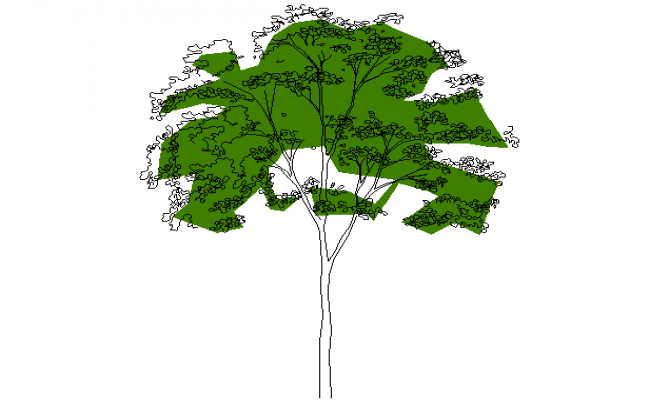 Elevation tree dwg file