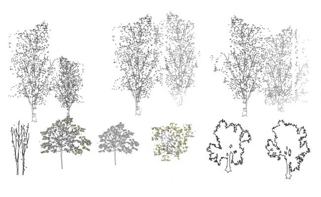 Free Tree Block DWG File