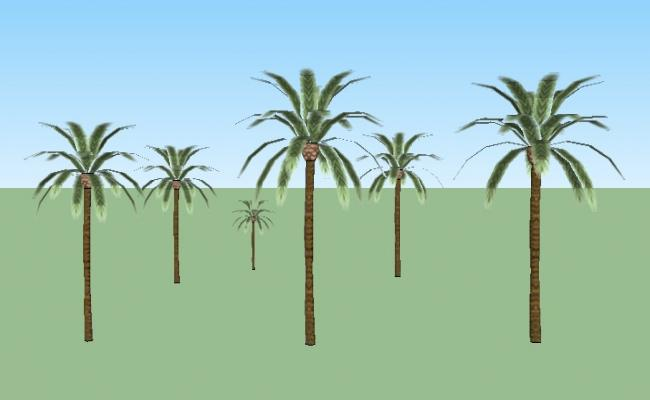 Multiple 3d coconut tree blocks cad drawing details skp file