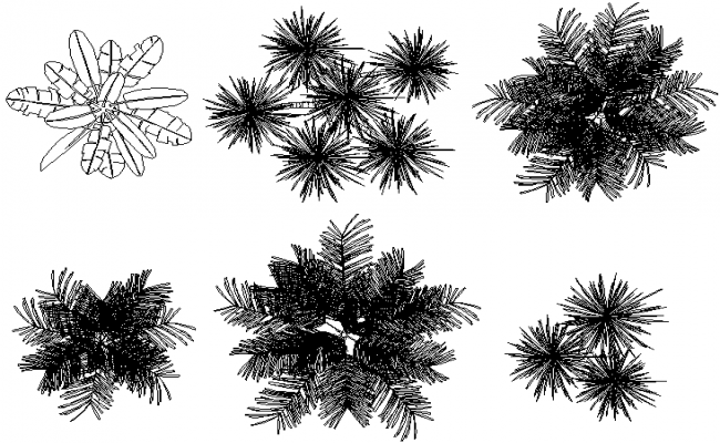 Plant tree top detail dwg file