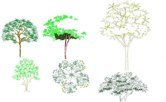 Tree elevation plan autocad file