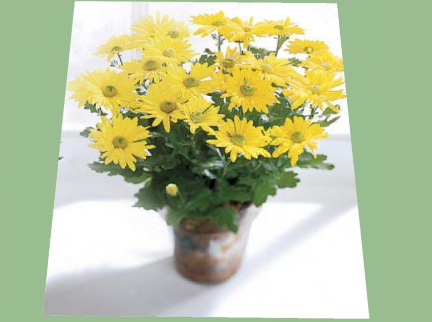 Beautiful decorative flower vase 3d model cad drawing details skp file