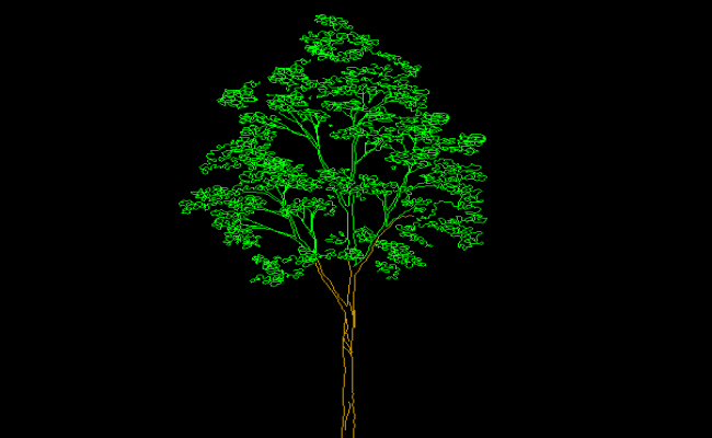 Heighted Tree
