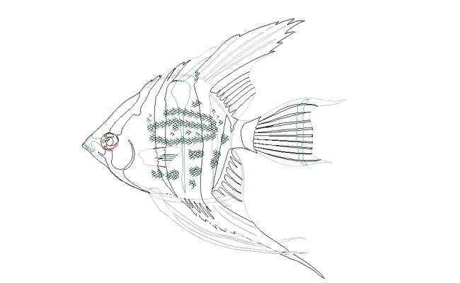 fish dwg file