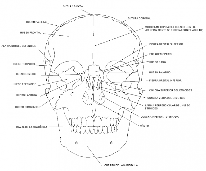 Skeletal drawing plan in dwg file.
