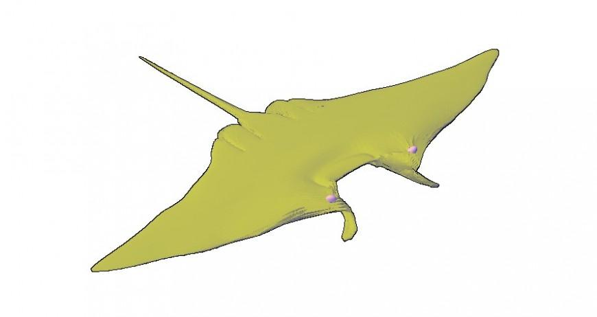 Stingray drawings details of aquatic animal blocks dwg file