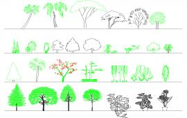 Tree plan design