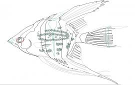Fish Cad DWG File