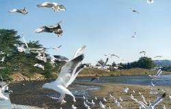 sea birds and gulls
