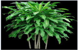 Interior plant picture for renders design drawing