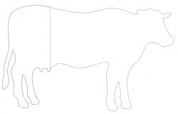 Ordinary cattle front view block dwg file