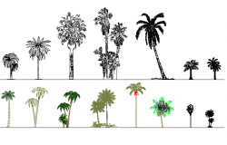 Plant tree detail dwg file