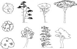 Tree detail dwg file