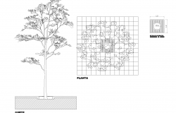 Tree plan detail dwg file.
