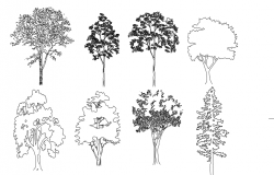 Trees Elevation