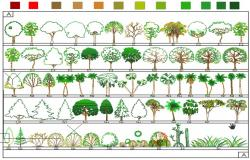 Trees elevations