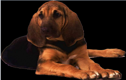 blood hound dog dwg file