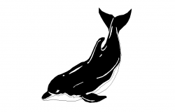 dolphin dwg file