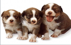 puppies dwg file