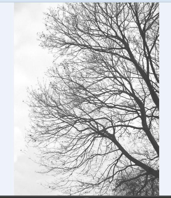 3d tree cad block design details dwg file