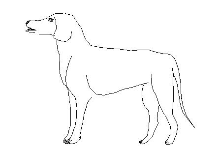 Dog 2d elevation details